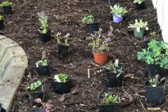 20210401-3-Da-werden-sie-eingepflanzt